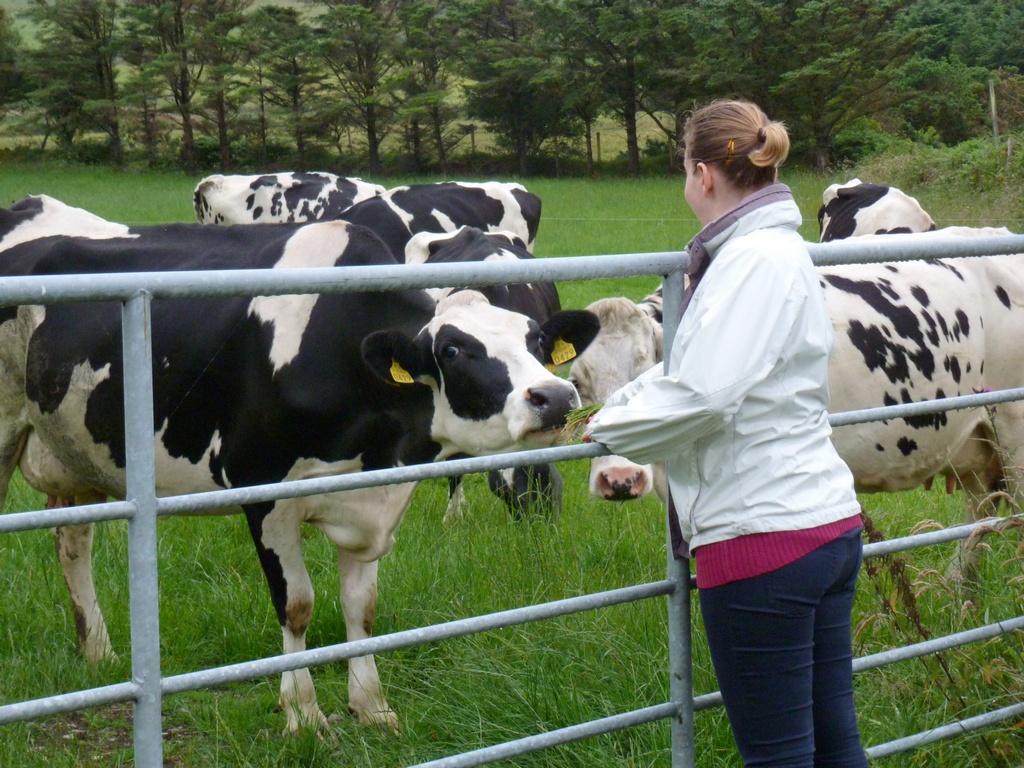 Marleen bij een nieuwsgierige koe.