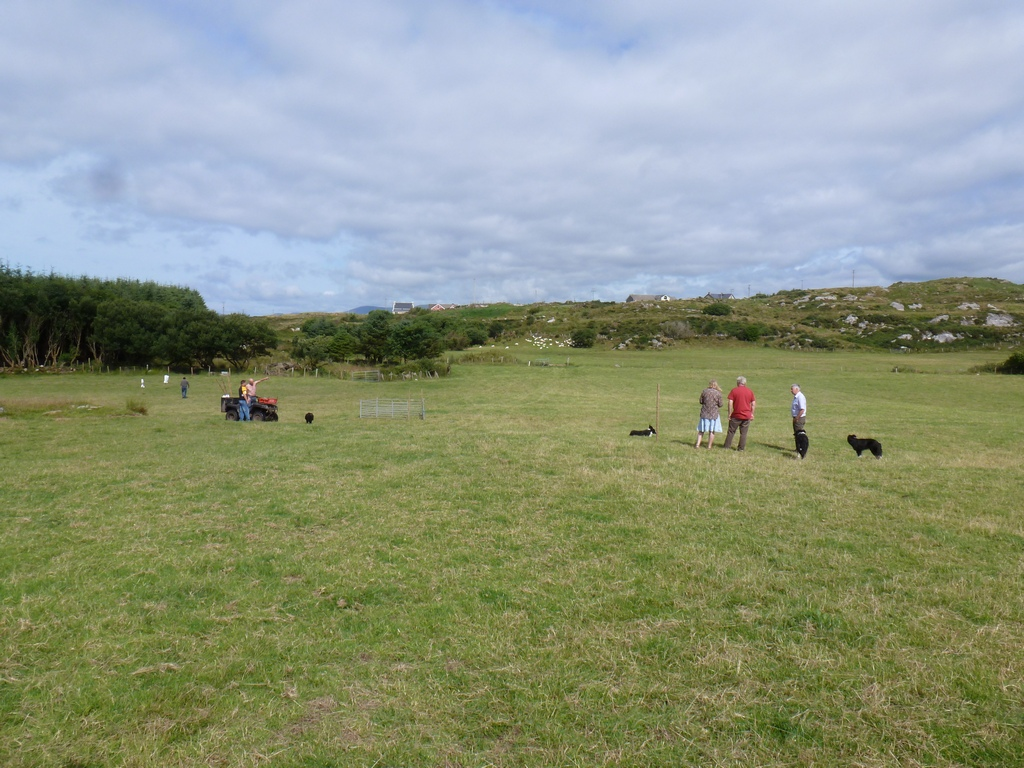 Sheep Trials voorbereidingen.