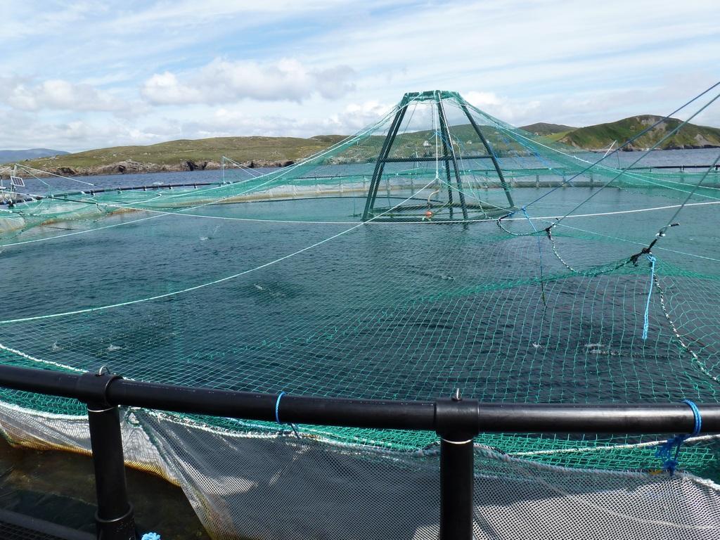 In deze ring zwemmen zo'n 50.000 3 maanden oude zalmen.