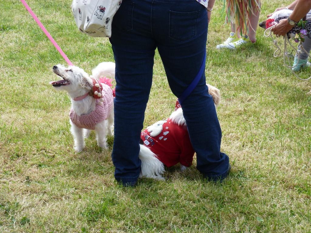 Kandidaten voor de Best Dressed Dog.