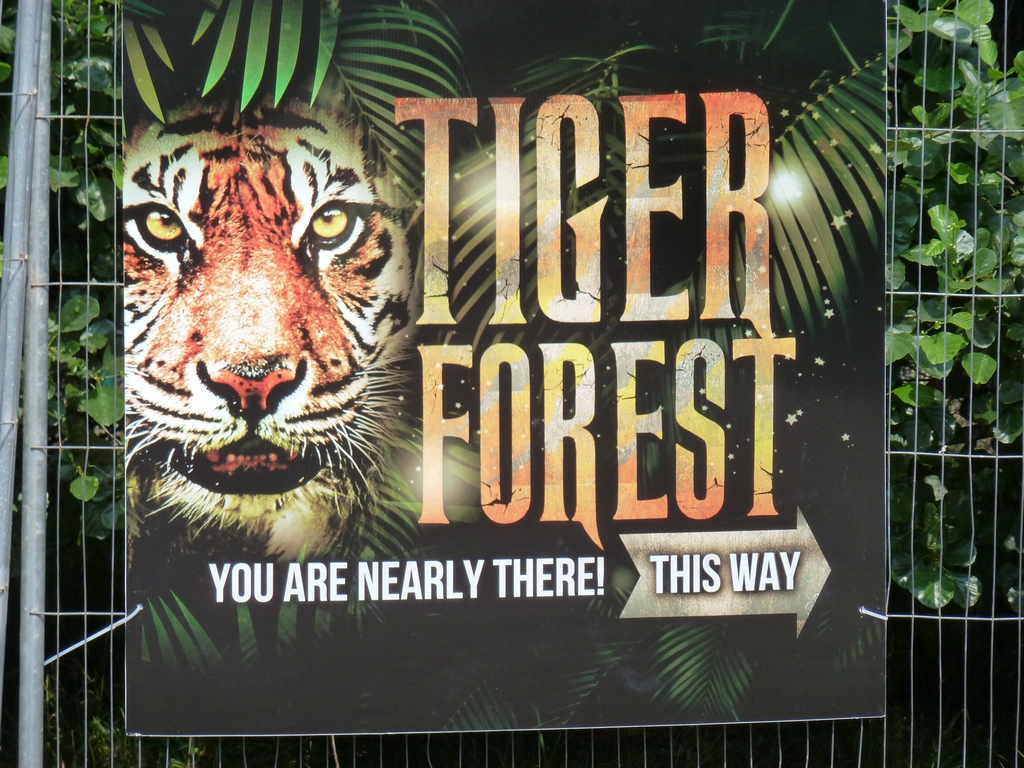 Tiger Forest.
