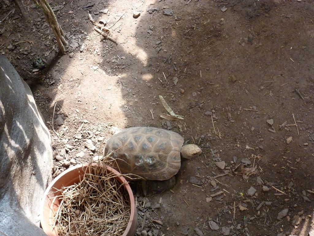Schildpad.
