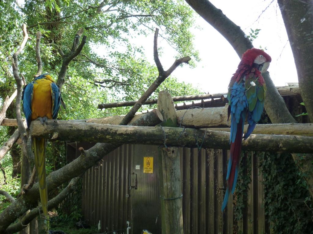 Papegaaien.