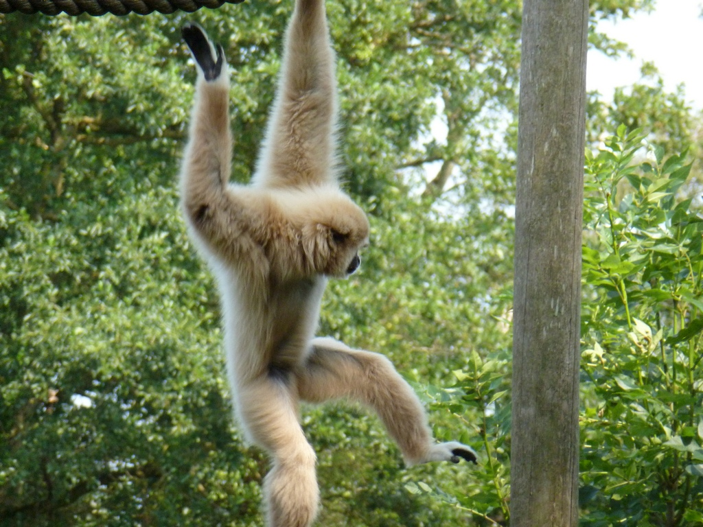 Withand Gibbon.