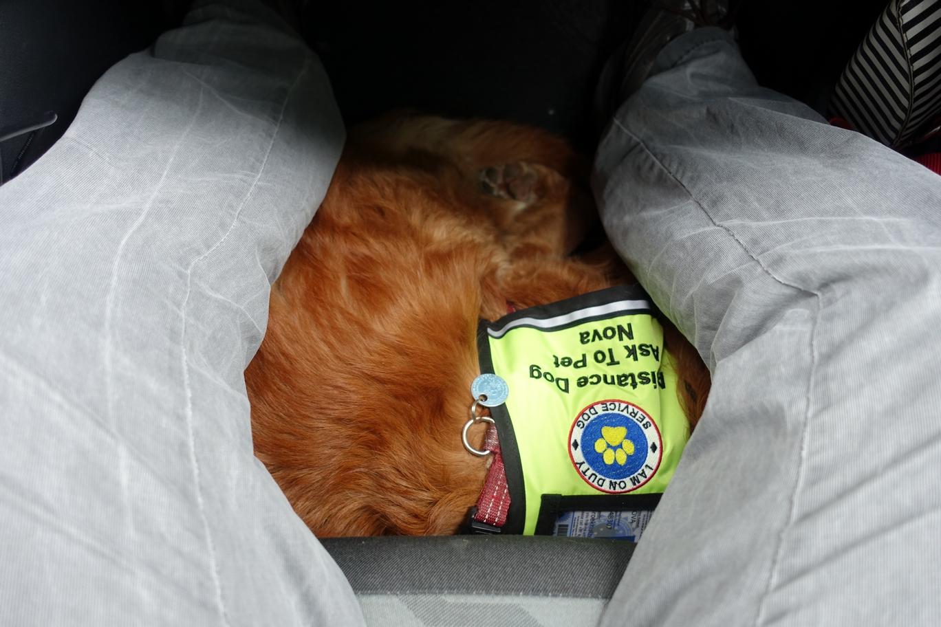 Nova in de auto