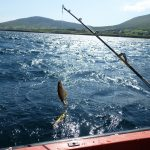 De eerste vangst